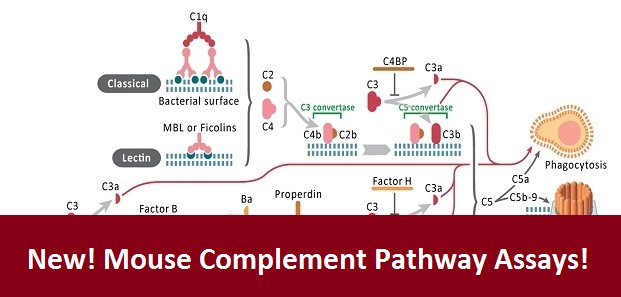 Complement Pathway Mouse